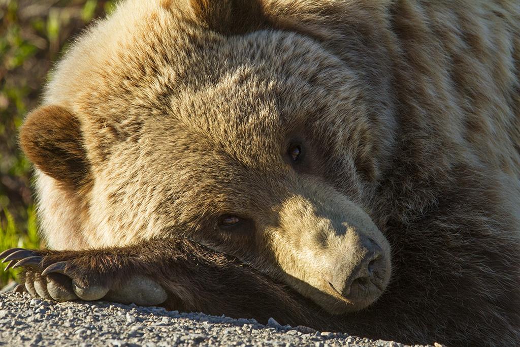 Sleepytime Bear