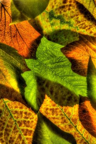 Dreams of Autumn_high_res