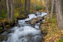Fall Rainbow Creek