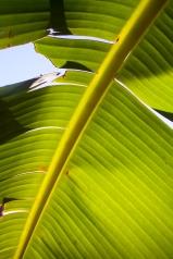 Maui026_MG_6916