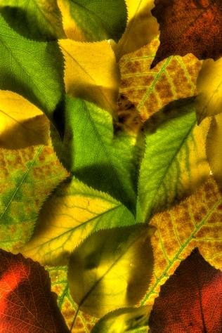 Fall leaves, Anchorage, Alaska